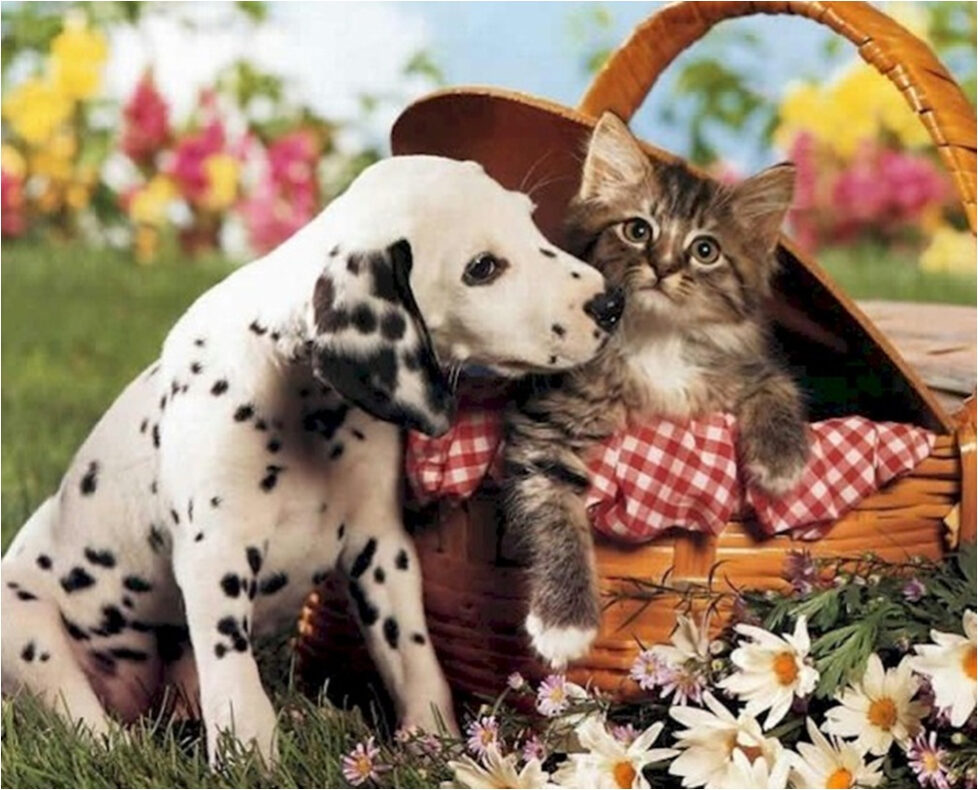 pets-dogs cats