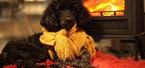 pet-friendly-selecionamos-os-melhores-hoteis-brasileiros-para-cachorros