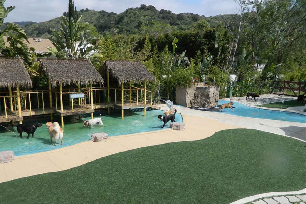 Paradise Ranch Pet Resort (Foto: Divulgação)