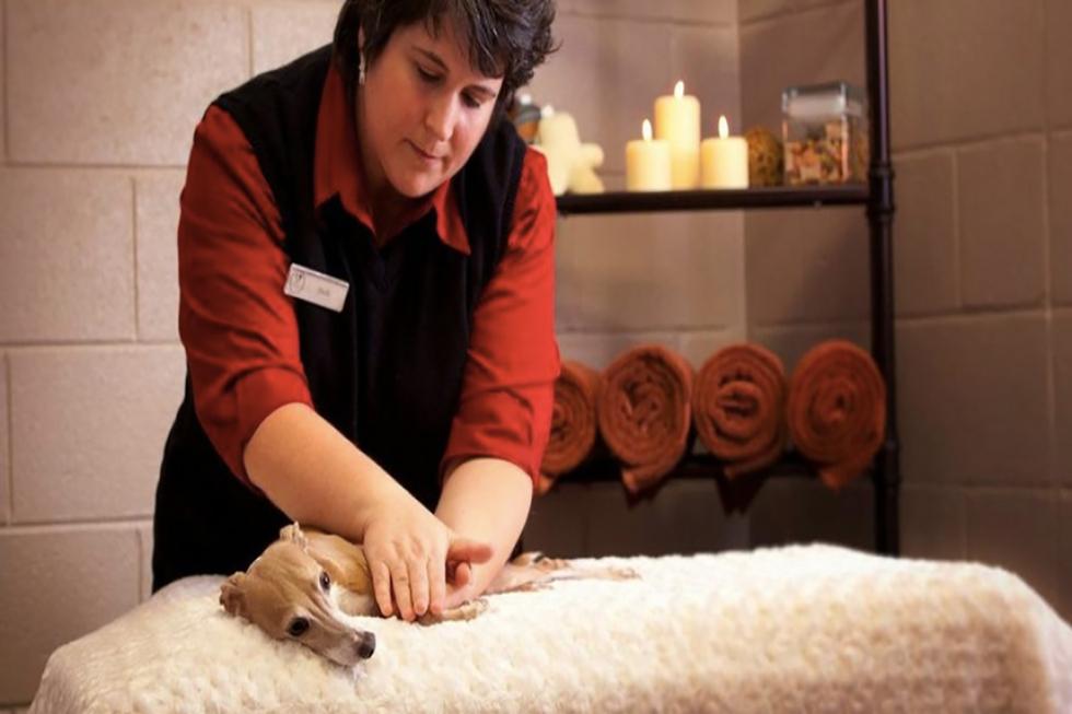 Olde Towne Pet Resort (Foto: Divulgação)