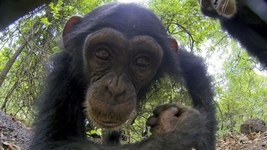 macaco-observa-em-seu-habitat-um-robo-espiao-em-espioes-da-natureza-no-animal-planet-1543589989732_v2_900x506